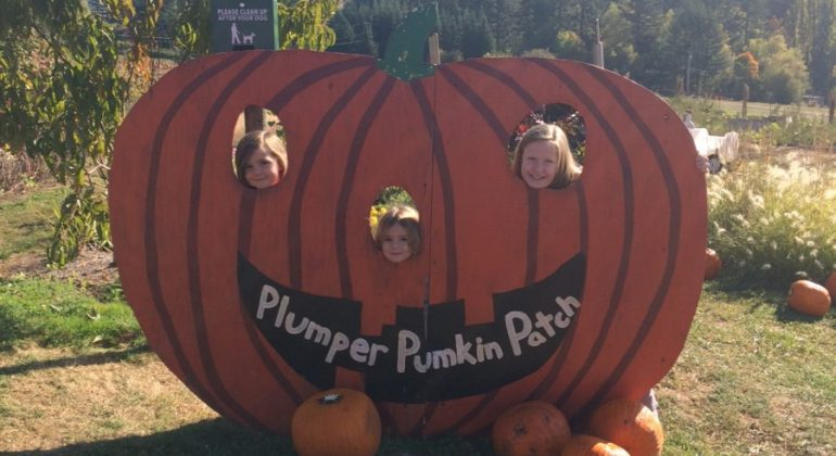 Portland Metro: Plumper Pumpkin Patch
