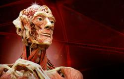 **canceled** OMSI Body Worlds