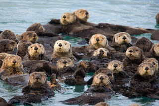 """Ongoing Otters"" Sustaining Giving"